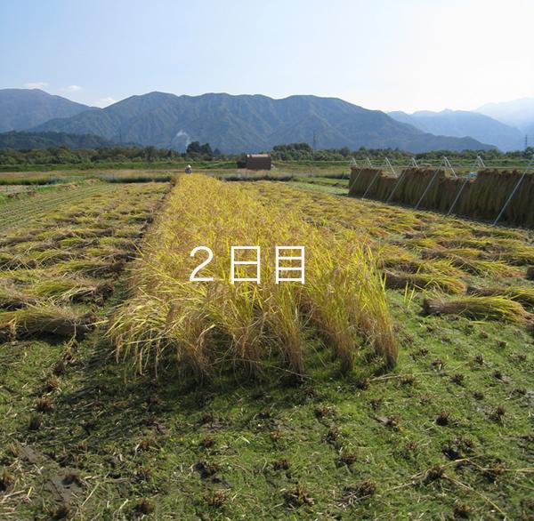 Imaihaza1